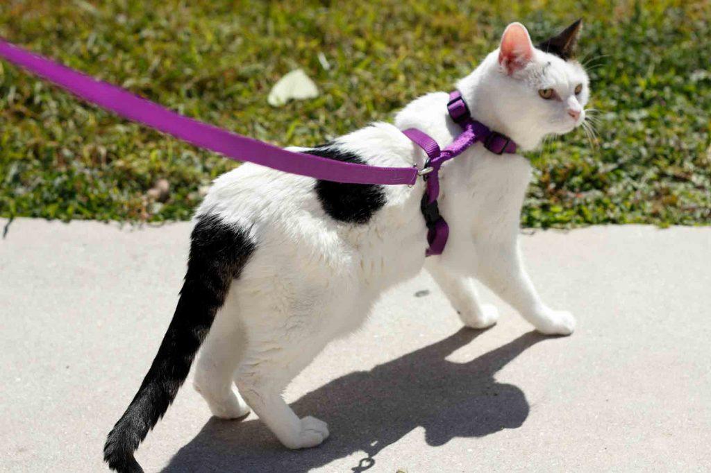 Cara sederhana melatih kucing Anda