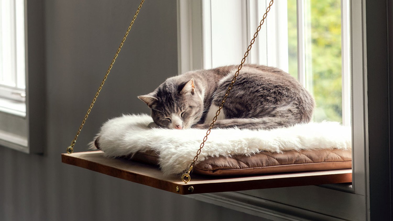 Alas tidur untuk kucing