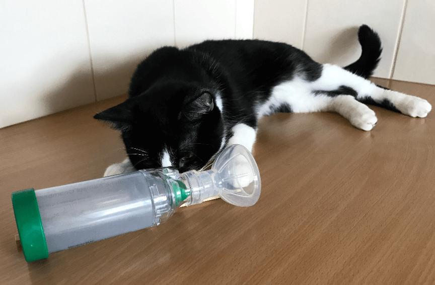Asma pada kucing