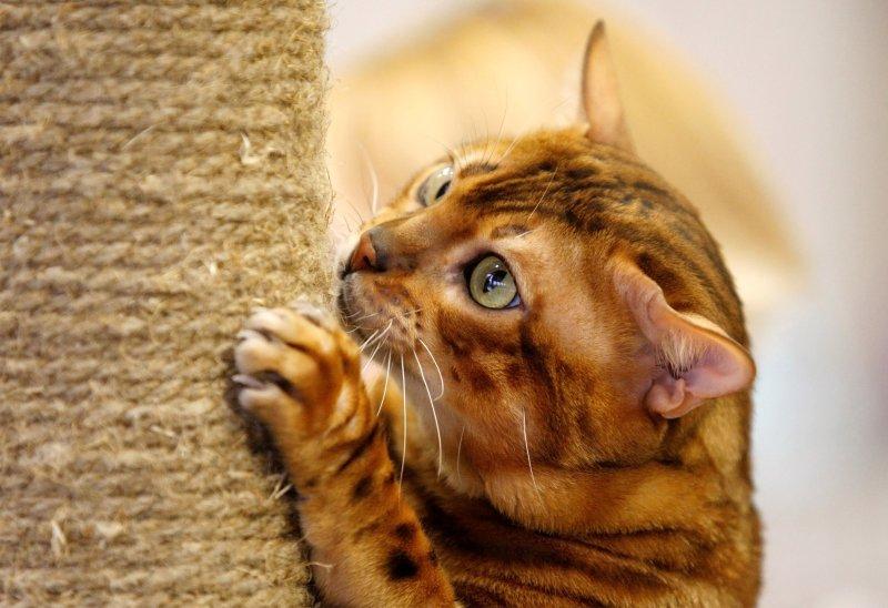 Kesehatan Kucing dan Perawatan Kucing