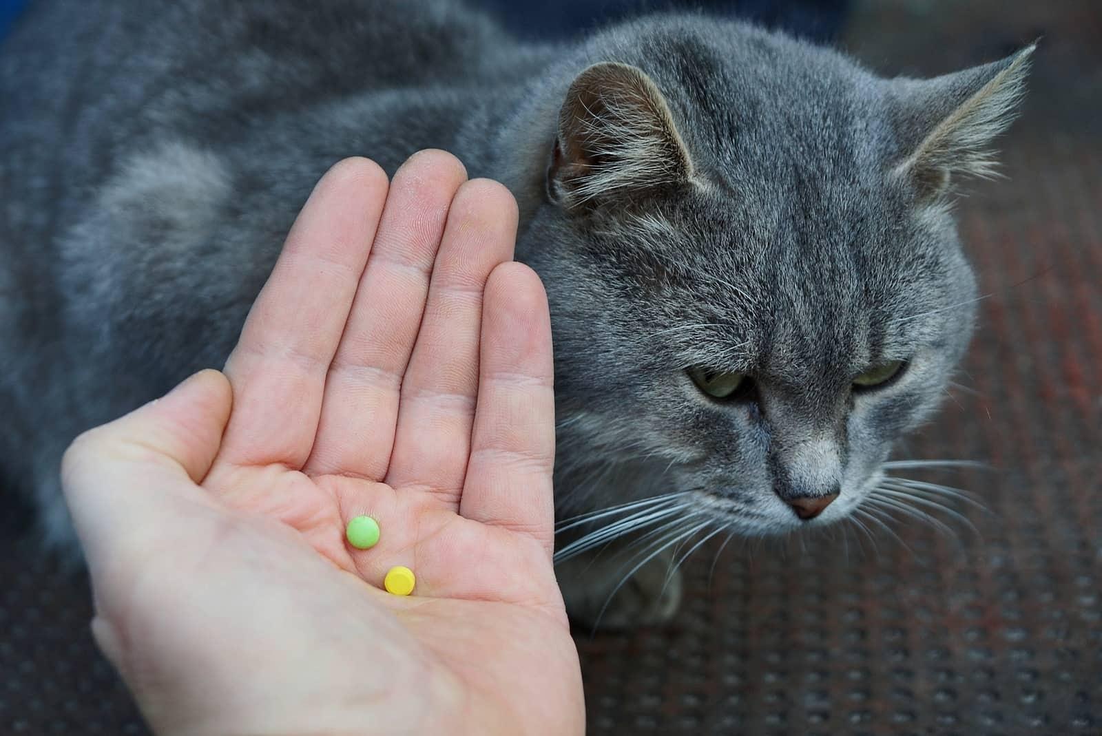 Kucing dan Pil Tablet