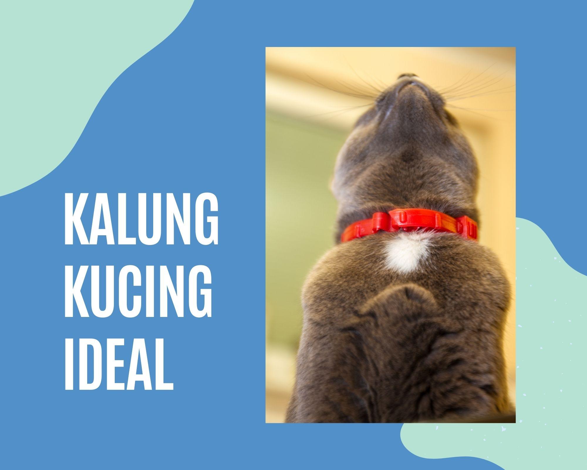 Menemukan Kalung Kucing yang Ideal