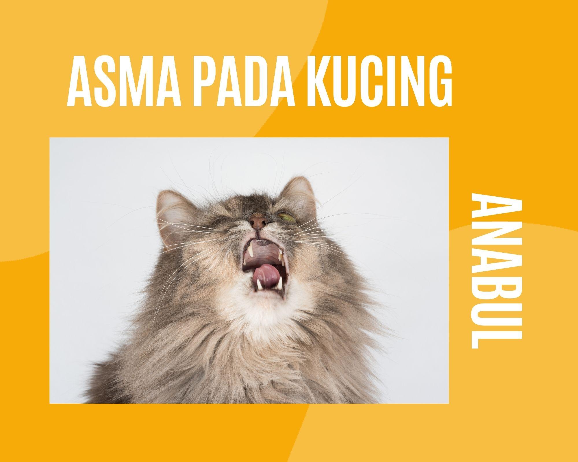 Cara mengetahui dan mengobati asma pada kucing